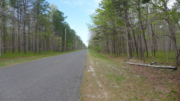 RoadPineBarrens